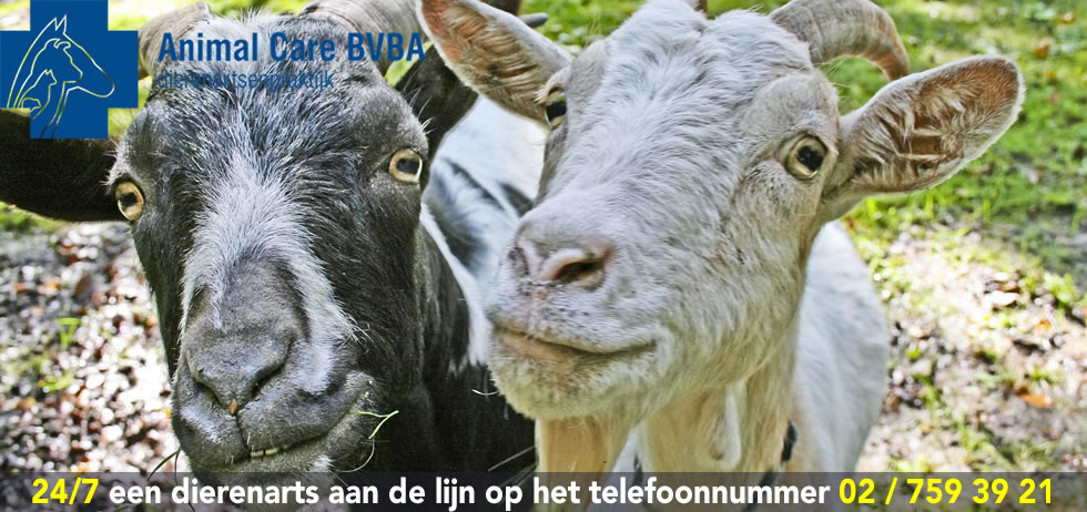 dierenarts geiten Animal Care BVBA