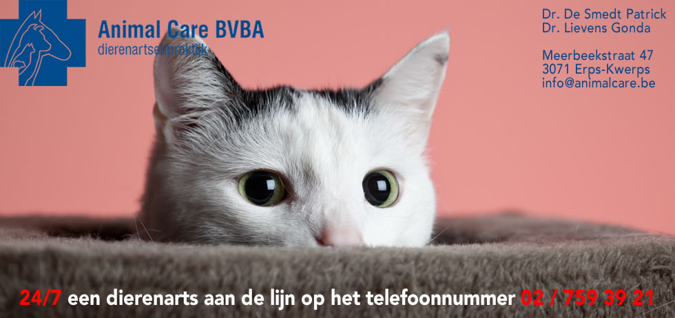 dierenarts katten Animal Care BVBA