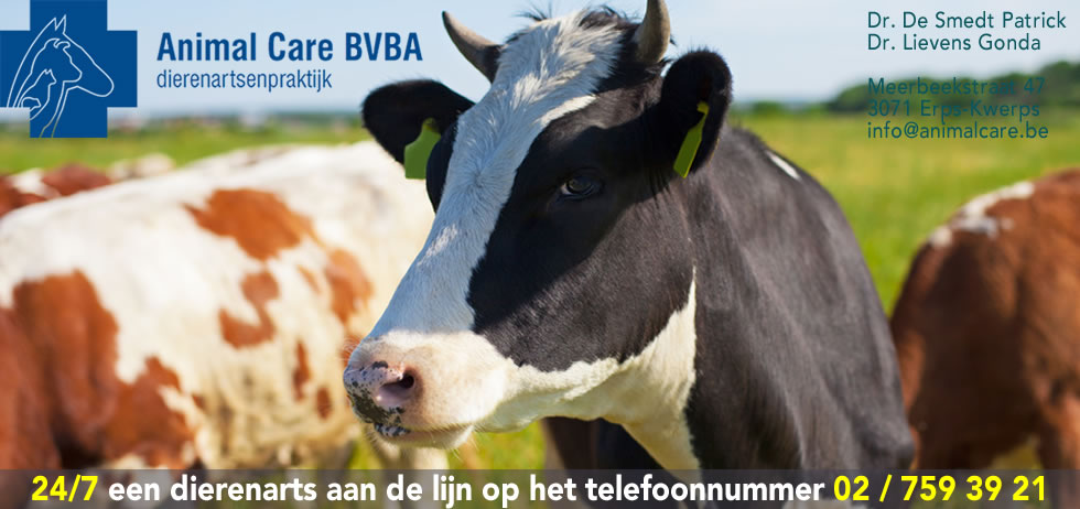 dierenarts rundvee Animal Care BVBA