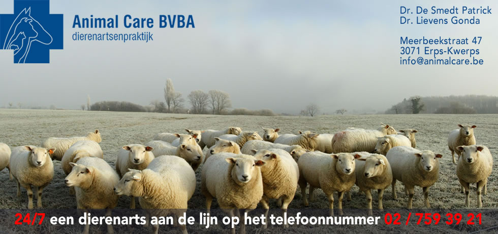 dierenarts schapen Animal Care BVBA